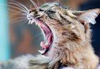 Болезнь укус кошки