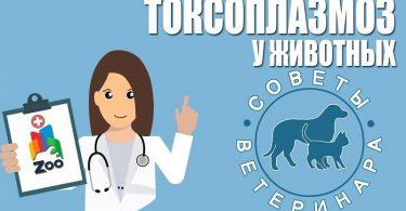 Токсоплазмоз у кошек: как проявляется