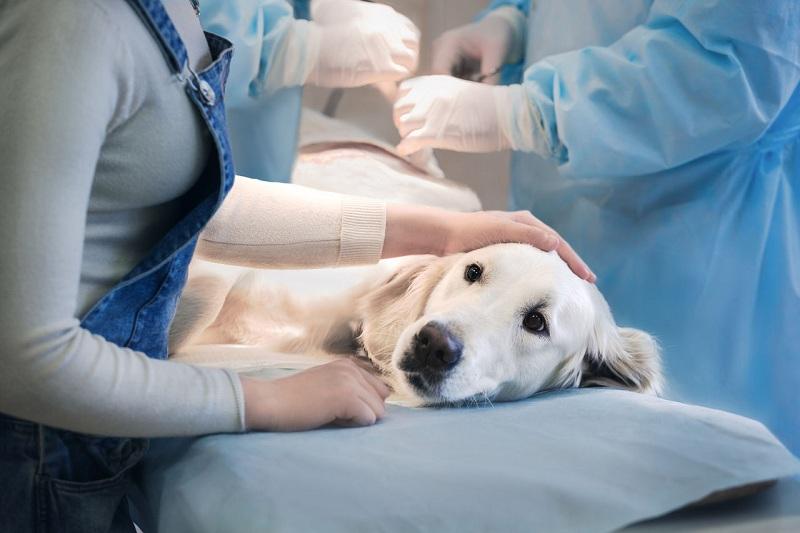 Симптомы бабезиоза у животных