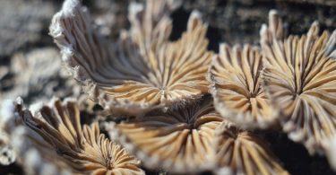 Микроскопические грибы