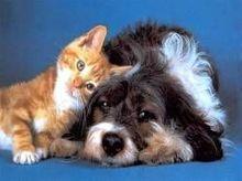 Болезни собак и кошек