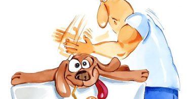 Методы лечение животных массажем