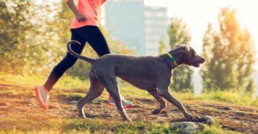 Влияние прогулок на здоровье
