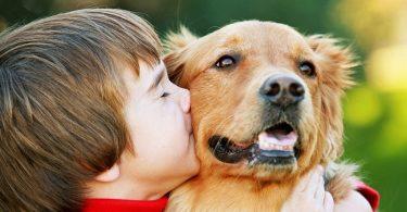 Как играют собаки и кошки