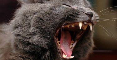 Причина агрессии животных