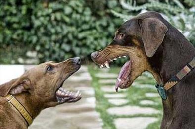 Агрессивные игры