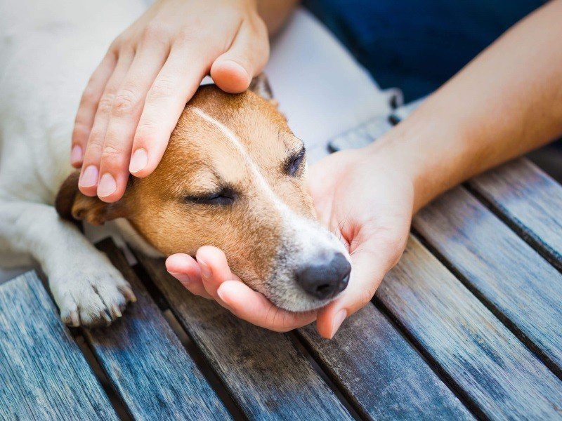 Причины возникновения кашля у животных