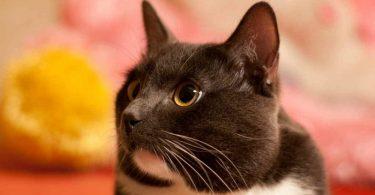 Чем лечить акне: средство от акне для животных