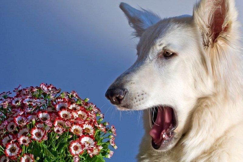 Аллергия у собак и кошек