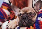 Рецепт от аллергии для собак и кошек