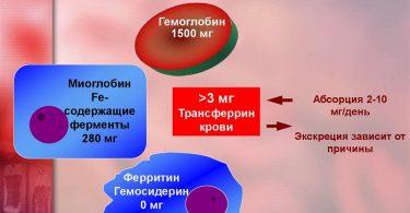 Рецепты от анемии для животных