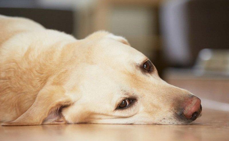 Как устранить апатию у животных
