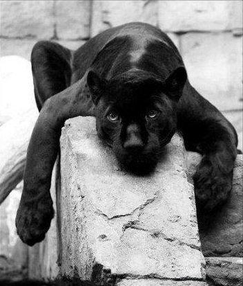 Апатия у животных