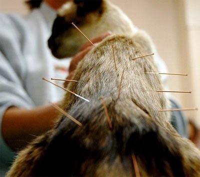 Лечение артрита у собак и кошек