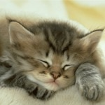 Кошка (собака) не спит