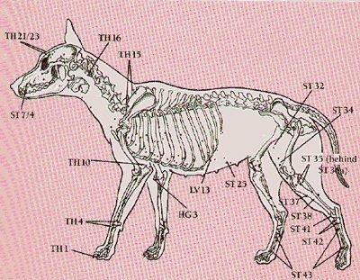 Рецепты для больного сердца кошки (собаки)