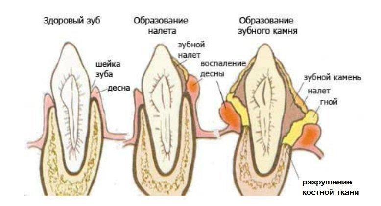 Как выглядит зубной налет у животных