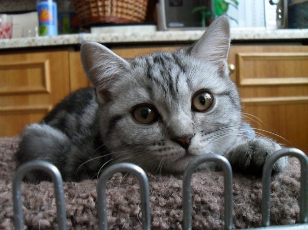 Симптомы и причины воспаления кишечника у собак и кошек