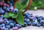 Травы и витамины против выпадения шерсти
