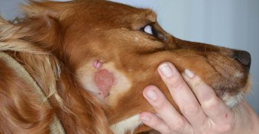 Как выглядит дерматит у животных