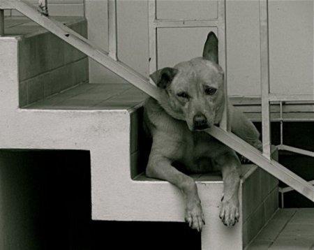Причины депрессии у животных