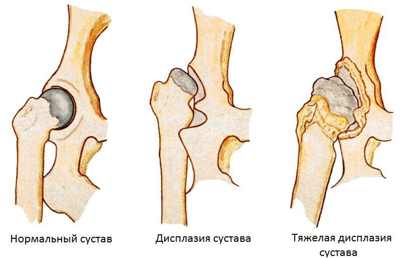 Тазобедренный сустав у собаки лечение уколы в колено для суставов название