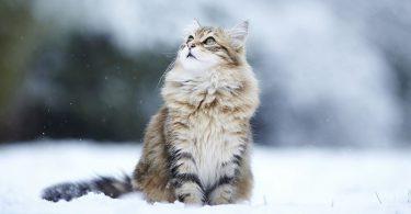 Советы по уходу за животными в холодное время года