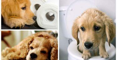 Определение и профилактика запора у животных
