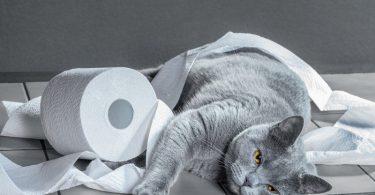 Правила лечение запора у животных