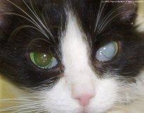 Причины катаракты у собак и кошек