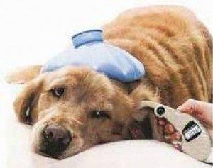 Способы профилактики клещей у животных