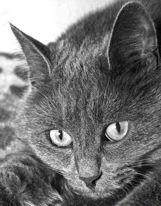 Крапивница у собак и кошек