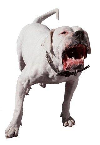 Собака лает и не успокаивается