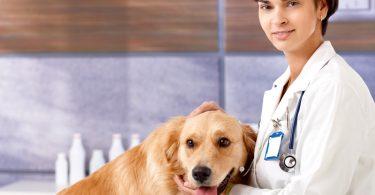 Профилактика микрофилярии у собак и кошек
