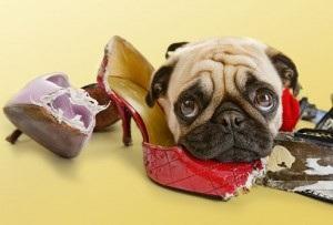 Как остановить собаку, которая грызет вещи