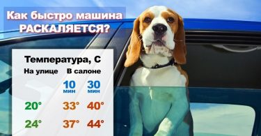 Помогаем животным при жаре