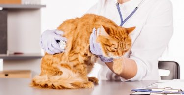 Средства от аллергии: что принимать животным