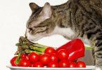 Лекарства от аллергии для животных