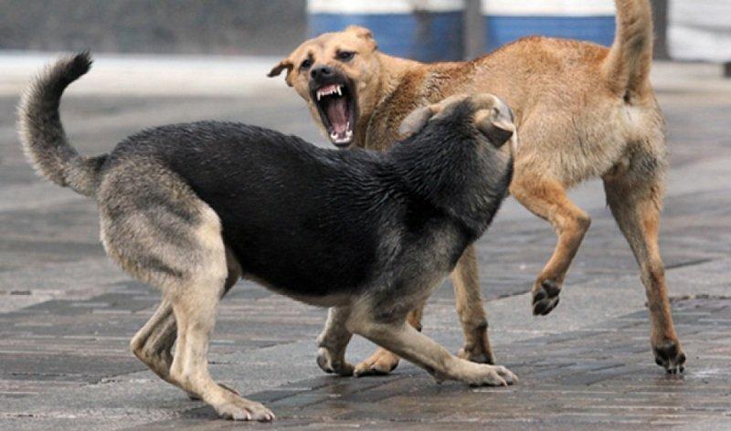 Повышенная агрессивность