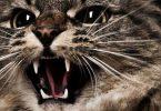 Как вылечить агрессивность у животных