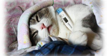 Симптомы повышенной температуры у кошки (собаки)