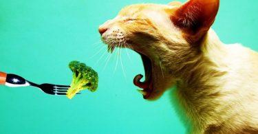 Что влияет на аппетит животных