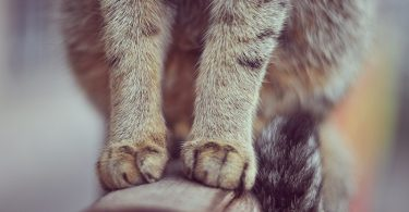 Проблема с походом в туалет у кошки (собаки)