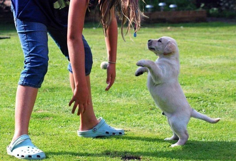 Причины, по которым собака прыгает на человека