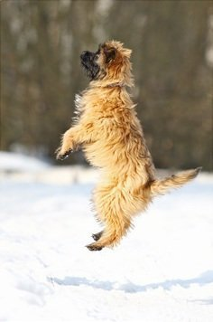 Если собака прыгает на людей