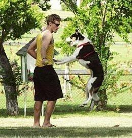 Чтобы собака не прыгала не людей
