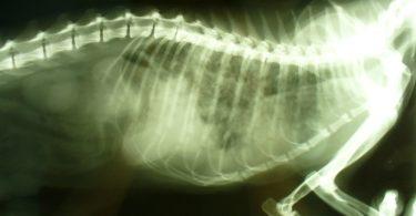 У собаки (кошки) обнаружили рак