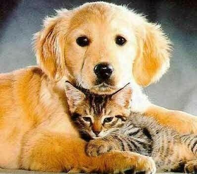 Рак у домашних животных
