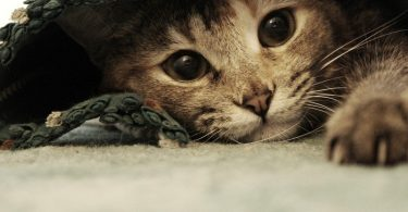 Доброкачественная (злокачественная) опухоль у собаки (кошки)