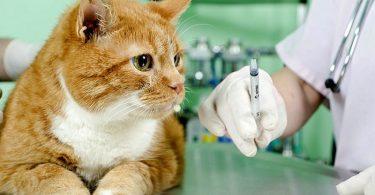 Средства для повышения иммунитет питомца